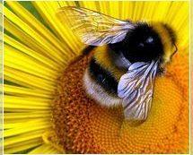 Мёд для похудения