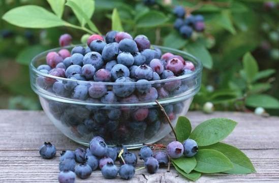 Как заморозить иргу на зиму, чтобы сохранить все витамины?