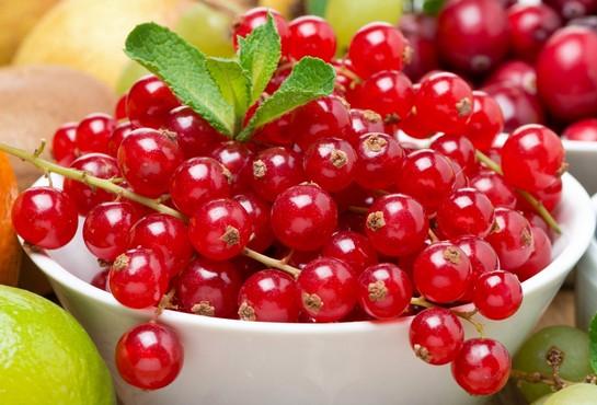 красная смородина полезные свойства и противопоказания