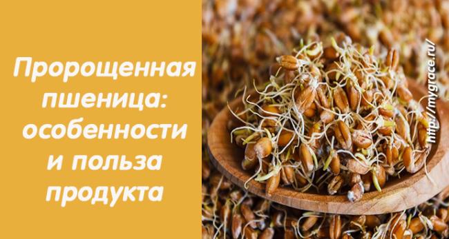 Пророщенная пшеница: особенности и невероятная польза продукта!