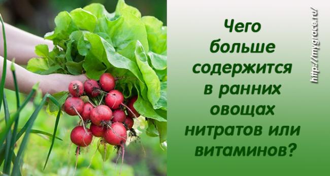 Чего больше содержится в ранних овощах - нитратов или витаминов?