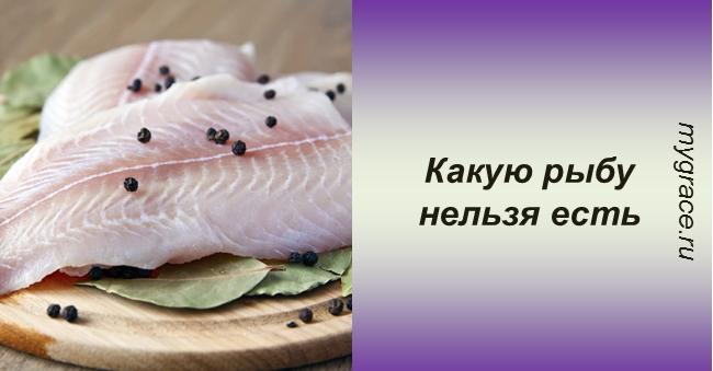 6 видов самых опасных рыб, которых лучше не есть