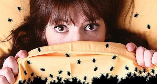 6 эффективных способов избавления от надоедливых насекомых в доме