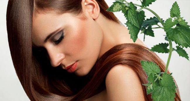 Крапива - волшебное растение для красоты и здоровья!