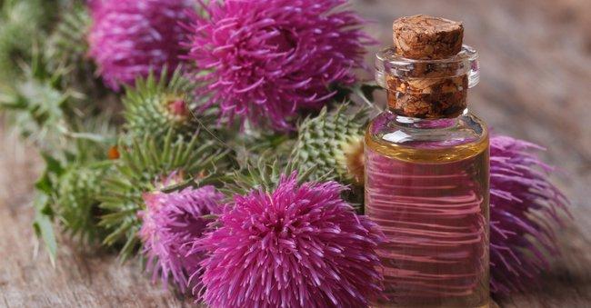 Эффективнейшее репейное масло для волос: лучшие рецепты применения в домашних условиях